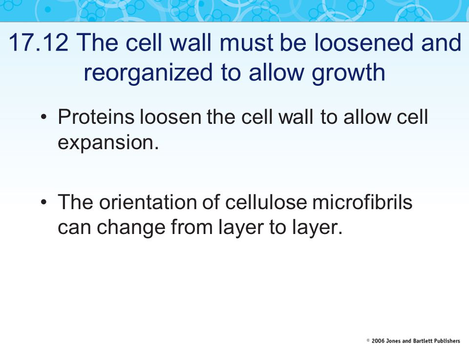 17.12 The cell wall must be loosened and reorganized to allow growth Proteins loosen the cell wall to allow cell expansion. The orientation of cellulo
