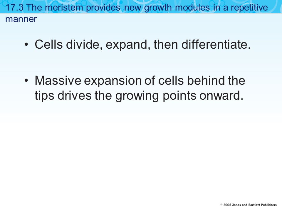 17.12 The cell wall must be loosened and reorganized to allow growth Proteins loosen the cell wall to allow cell expansion.