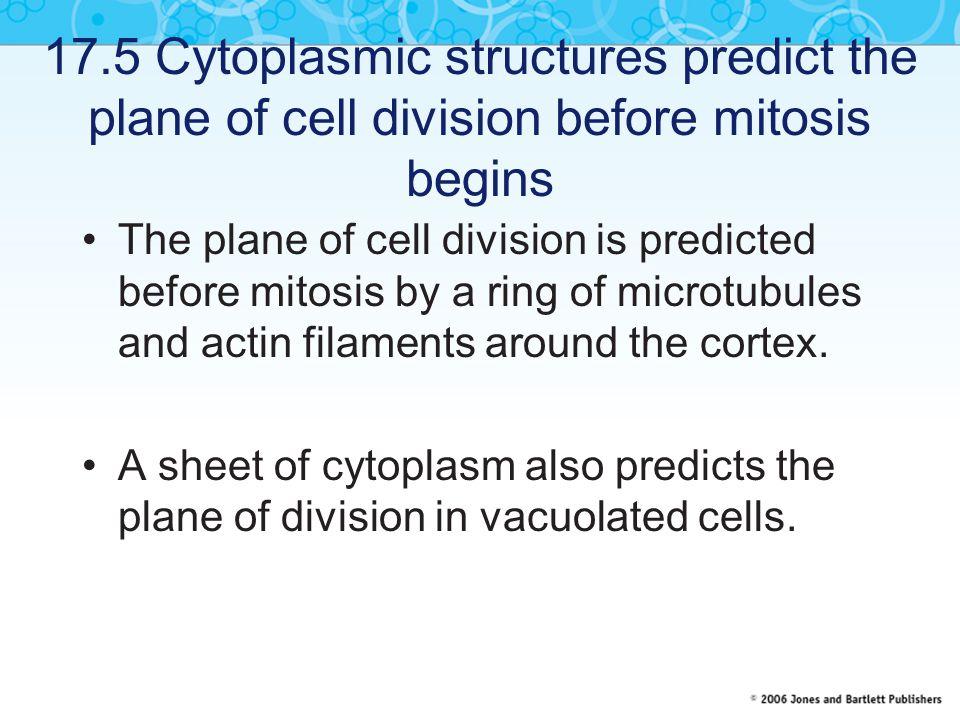 17.20 Plants contain unique organelles called plastids Plastids are membrane-bounded organelles that are unique to plants.