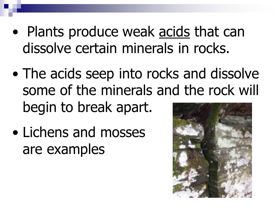 Plants produce weak acids that can dissolve certain minerals in rocks.