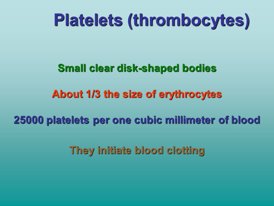Platelets (thrombocytes) Small clear disk-shaped bodies About 1/3 the size of erythrocytes 25000 platelets per one cubic millimeter of blood They init