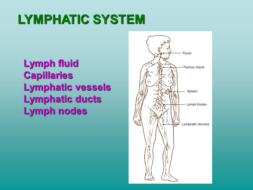 LYMPHATIC SYSTEM Lymph fluid Capillaries Lymphatic vessels Lymphatic ducts Lymph nodes