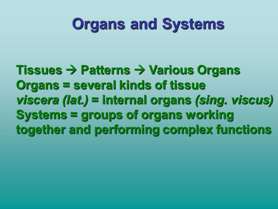 Organs and Systems Tissues  Patterns  Various Organs Organs = several kinds of tissue viscera (lat.) = internal organs (sing. viscus) Systems = grou