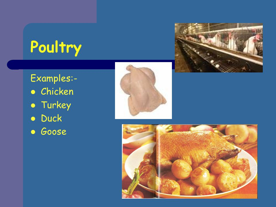 Poultry Examples:- Chicken Turkey Duck Goose