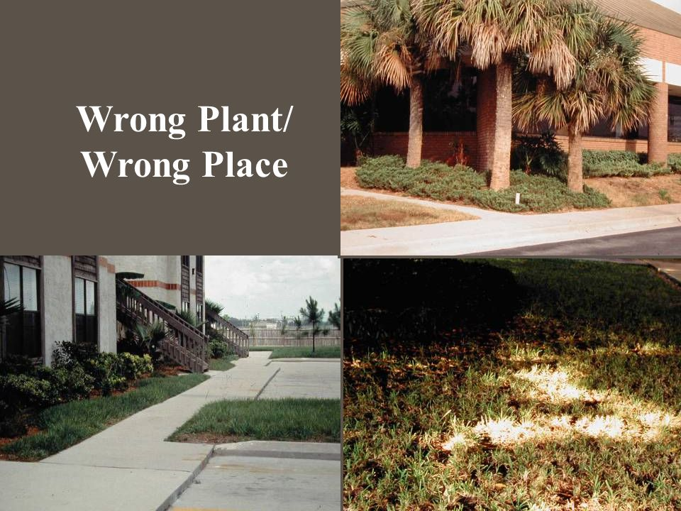 Wrong Plant/ Wrong Place