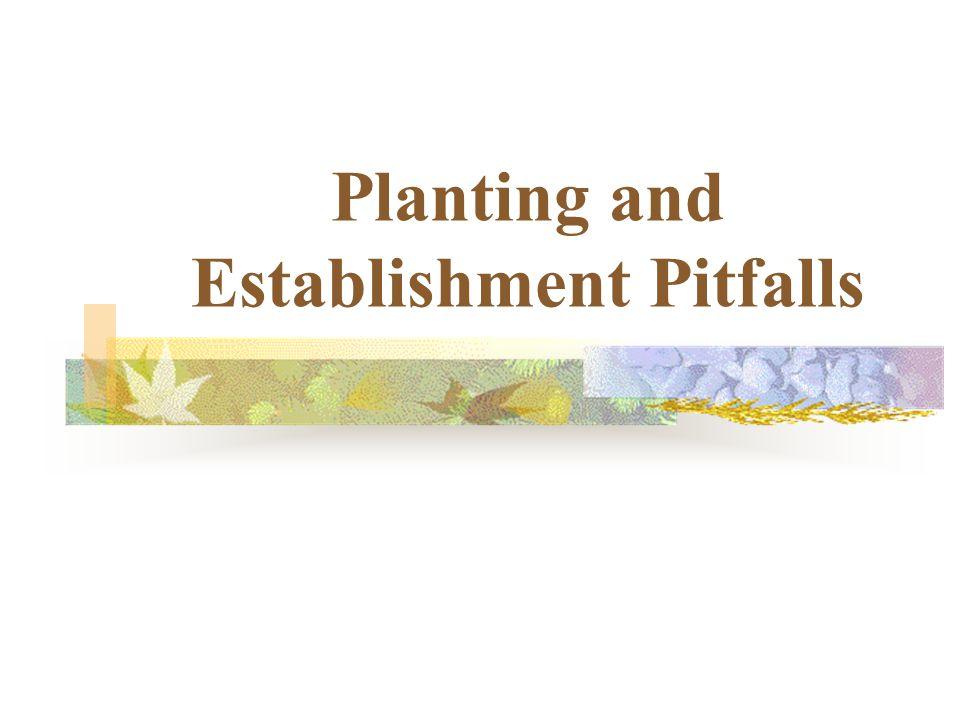 Planting and Establishment Pitfalls