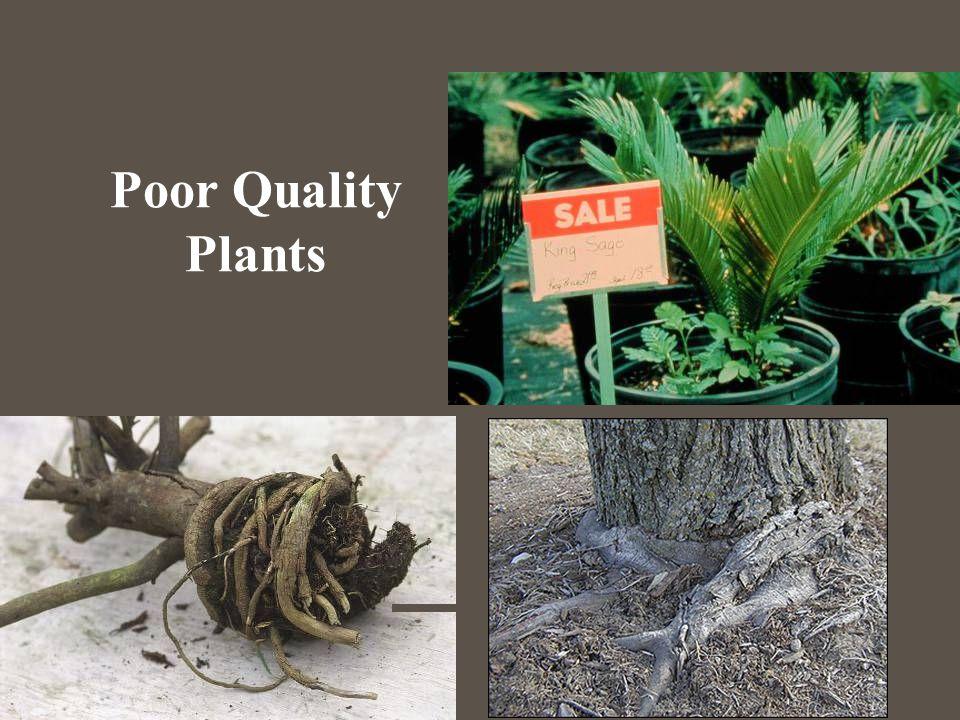 Poor Quality Plants