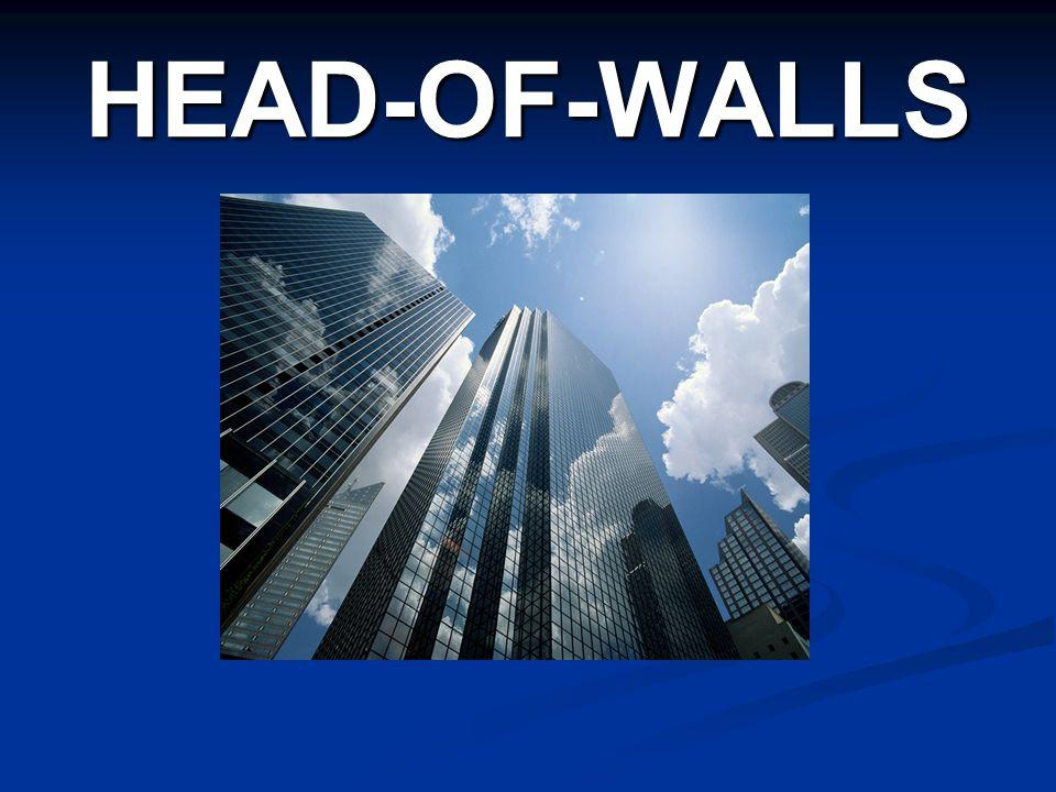 HEAD-OF-WALLS