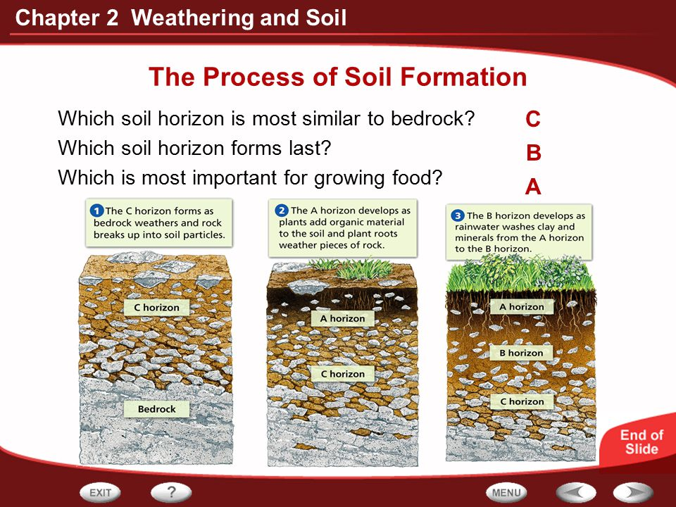 Chapter 2 Weathering and Soil The Process of Soil Formation Which soil horizon is most similar to bedrock? Which soil horizon forms last? Which is mos