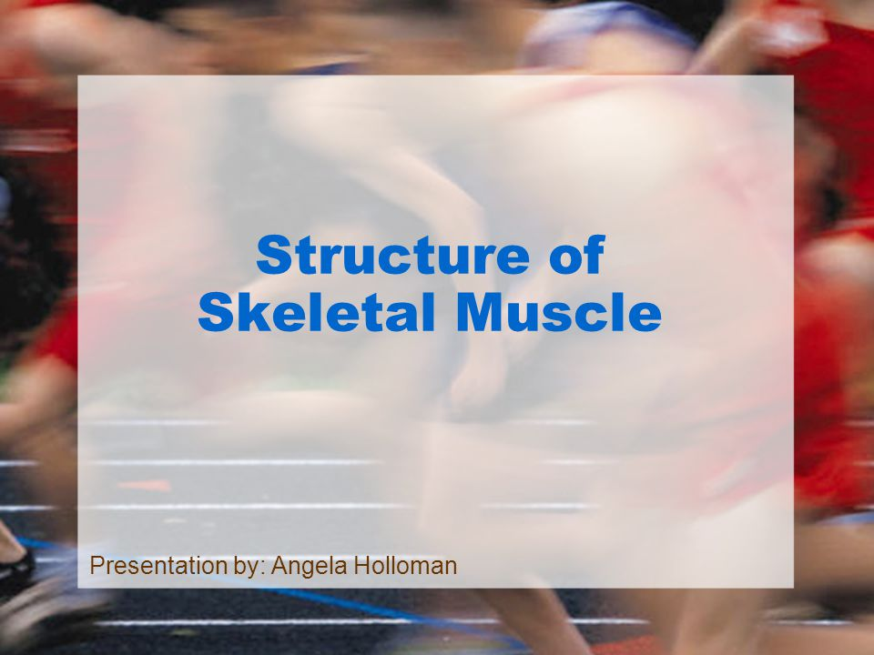 Structure of Skeletal Muscle Presentation by: Angela Holloman