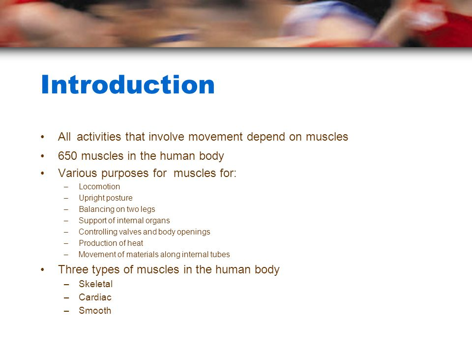 Introduction All activities that involve movement depend on muscles 650 muscles in the human body Various purposes for muscles for: –Locomotion –Upright posture –Balancing on two legs –Support of internal organs –Controlling valves and body openings –Production of heat –Movement of materials along internal tubes Three types of muscles in the human body –Skeletal –Cardiac –Smooth