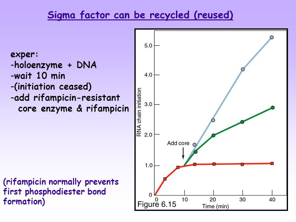 Sigma factor can be recycled (reused) exper: -holoenzyme + DNA -wait 10 min -(initiation ceased) -add rifampicin-resistant core enzyme & rifampicin (rifampicin normally prevents first phosphodiester bond formation)