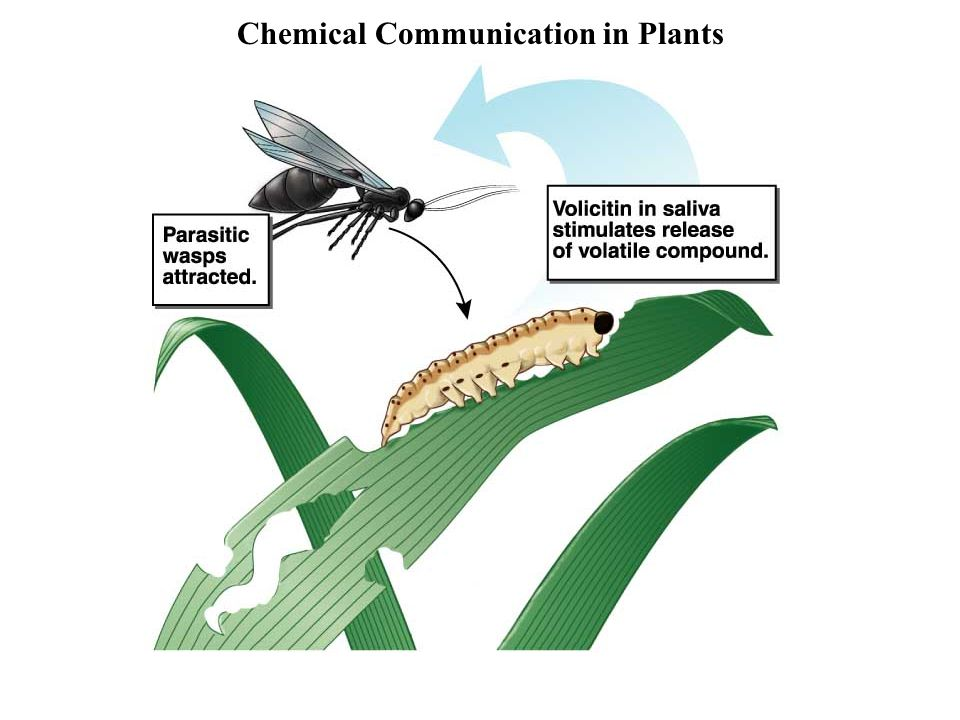 Chemical Communication in Plants