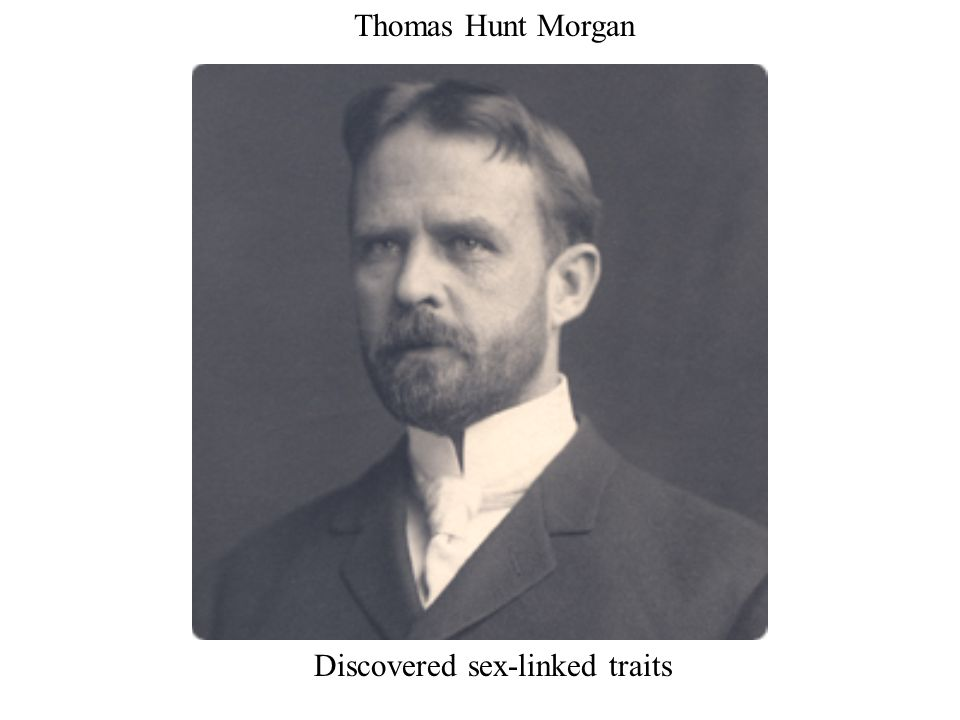 Thomas Hunt Morgan Discovered sex-linked traits