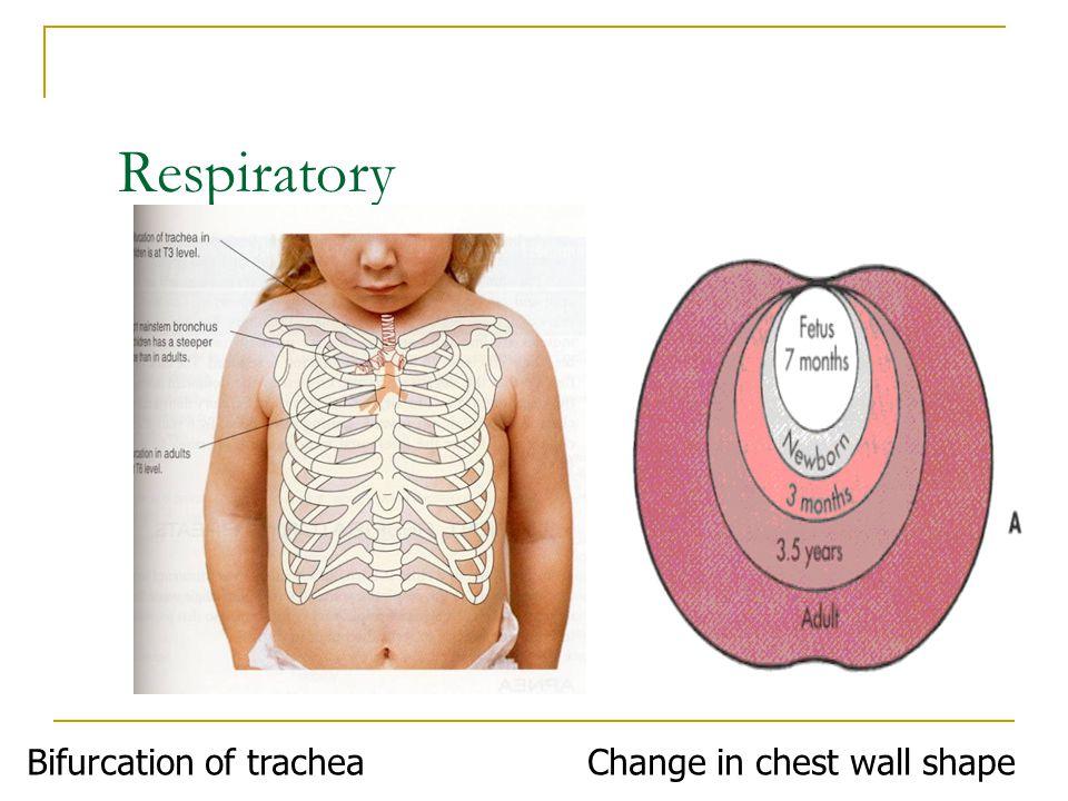 Respiratory Bifurcation of tracheaChange in chest wall shape