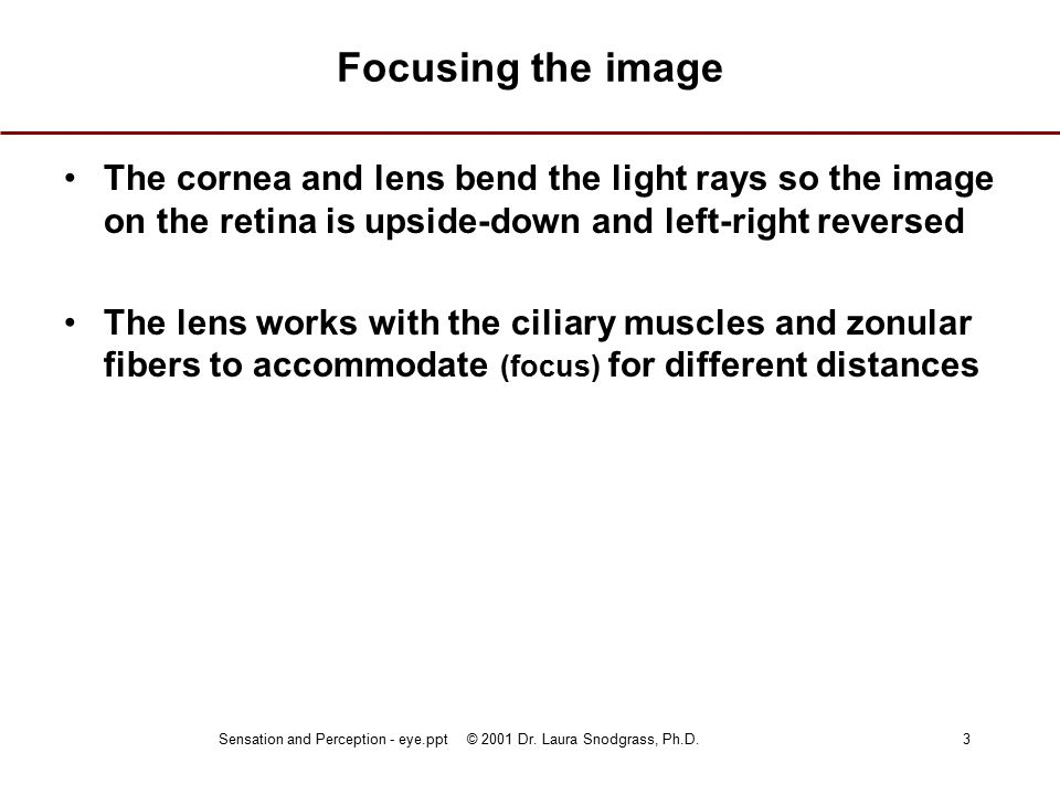 Sensation and Perception - eye.ppt © 2001 Dr.