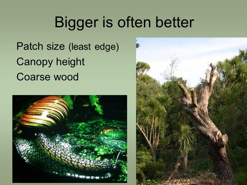 Bigger is often better Patch size (least edge) Canopy height Coarse wood