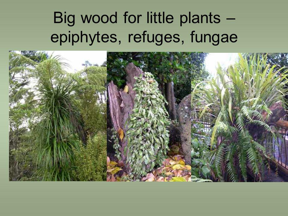 Big wood for little plants – epiphytes, refuges, fungae