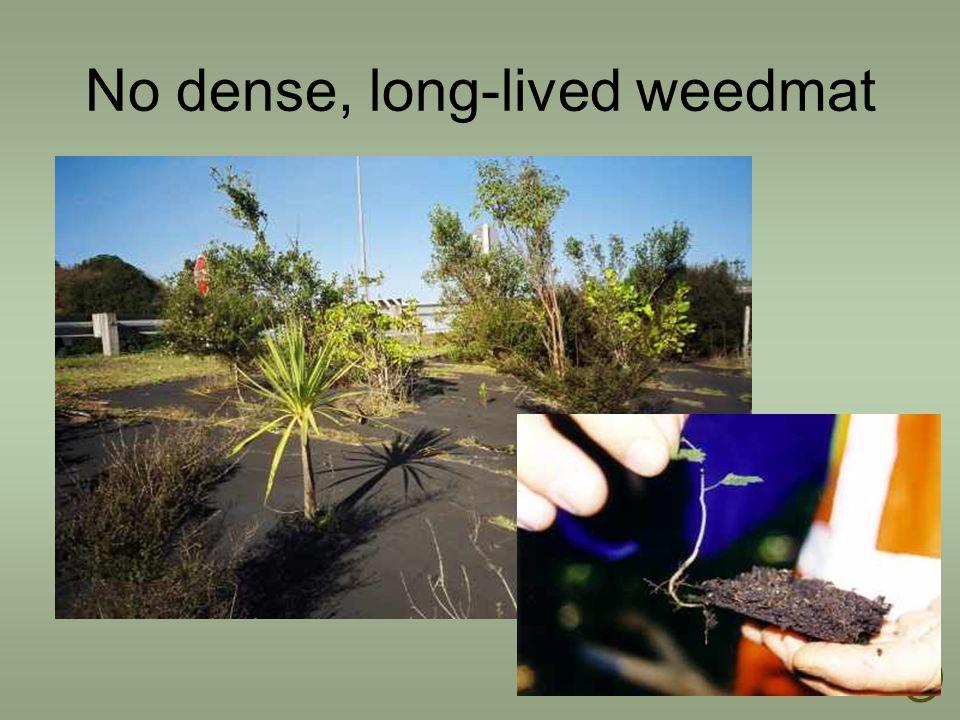 No dense, long-lived weedmat