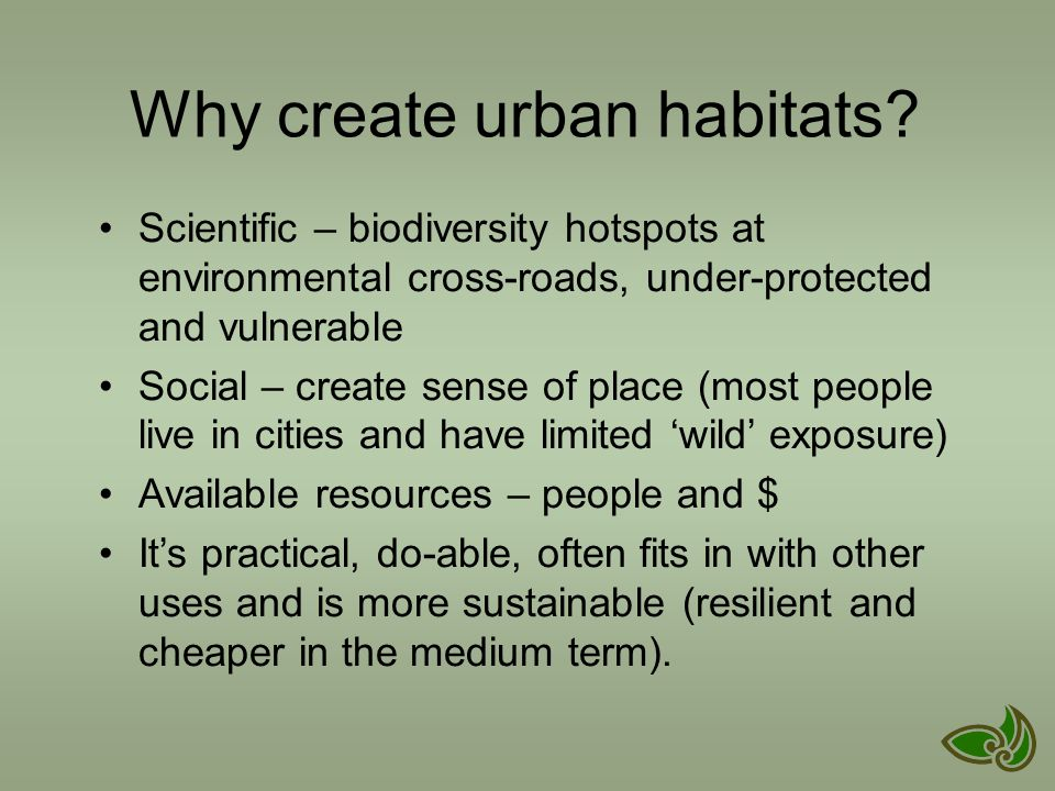 Why not? – we're in NZ, it's easy to increase natives in cities… especially mobile species