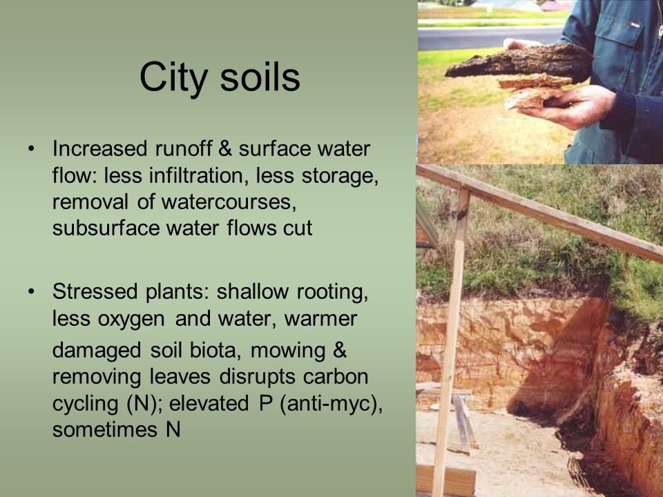 City soils Increased runoff & surface water flow: less infiltration, less storage, removal of watercourses, subsurface water flows cut Stressed plants: shallow rooting, less oxygen and water, warmer damaged soil biota, mowing & removing leaves disrupts carbon cycling (N); elevated P (anti-myc), sometimes N