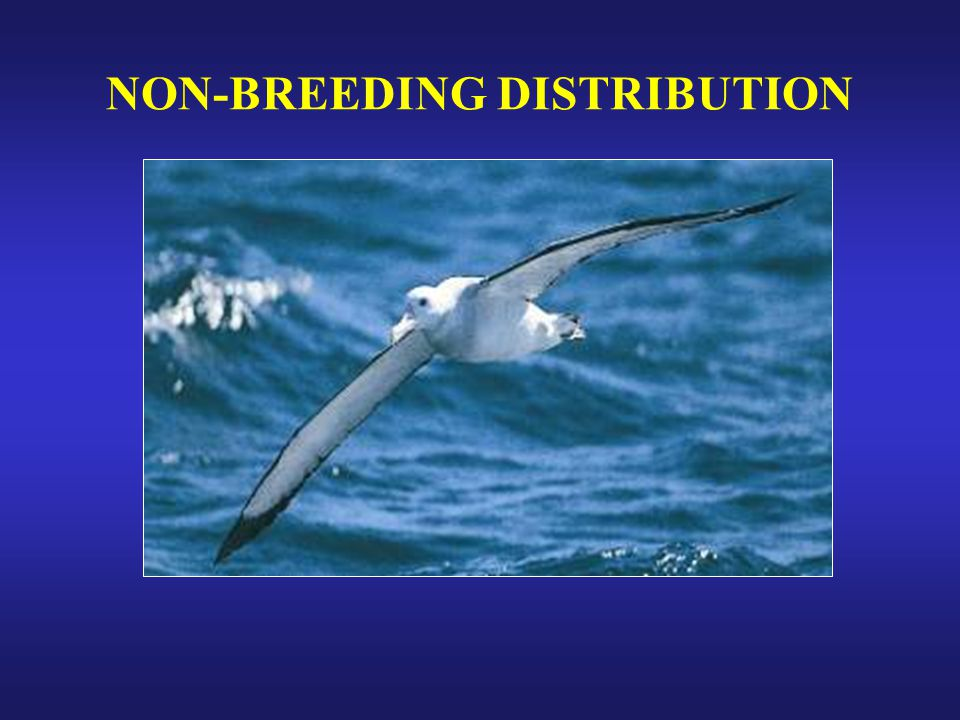 NON-BREEDING DISTRIBUTION