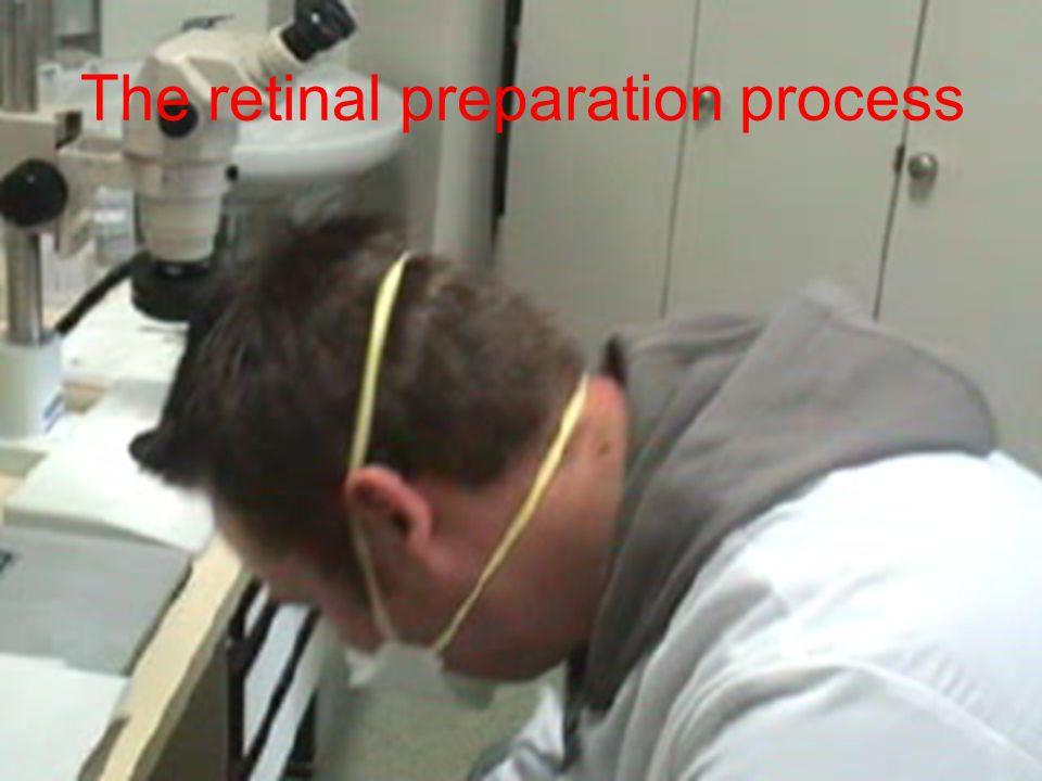 The retinal preparation process