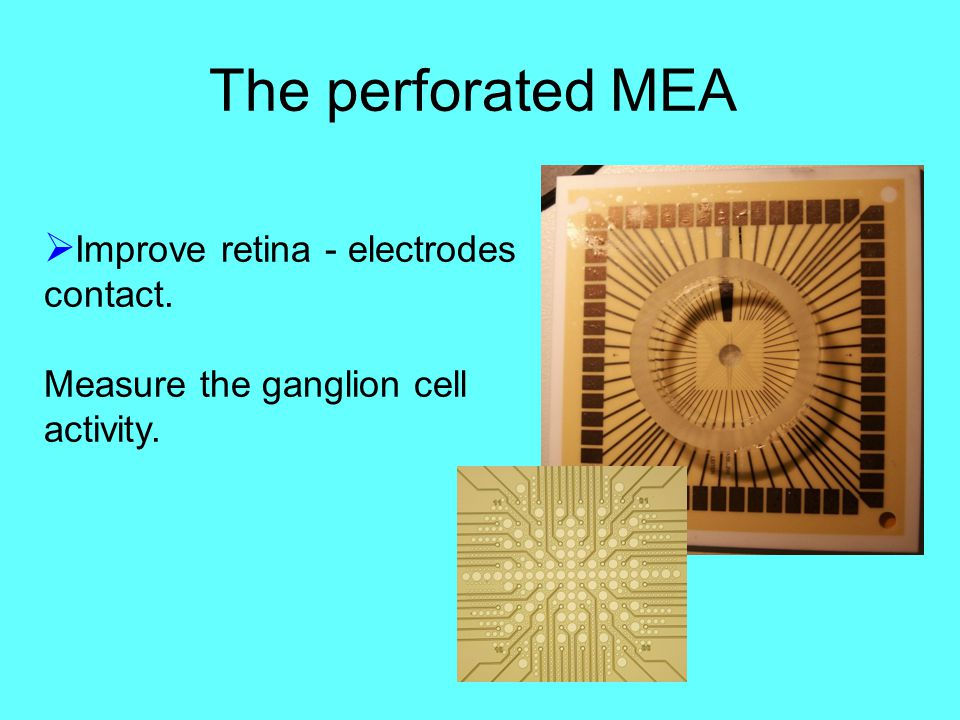 The perforated MEA  Improve retina - electrodes contact. Measure the ganglion cell activity.