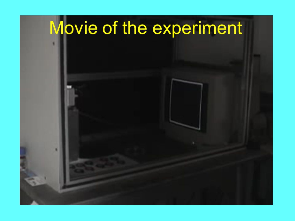 Movie of the experiment