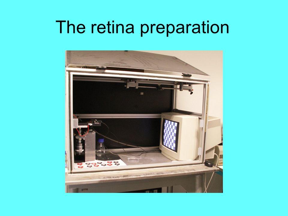 The retina preparation