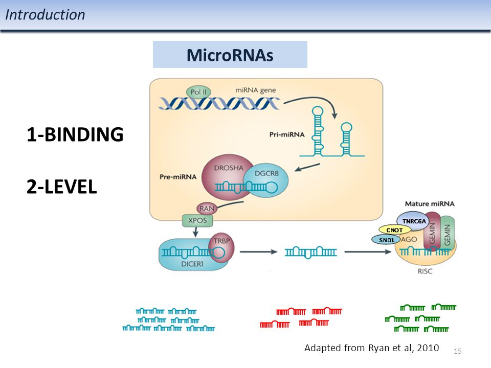 MicroRNAs Introduction 1-BINDING 2-LEVEL 15 Adapted from Ryan et al, 2010