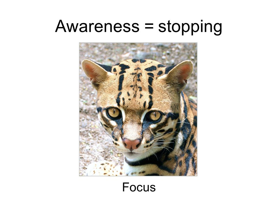 Awareness = stopping Focus
