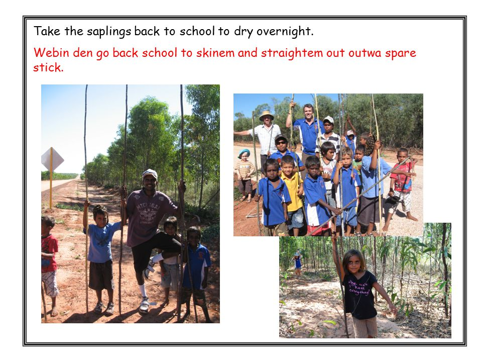 Take the saplings back to school to dry overnight. Webin den go back school to skinem and straightem out outwa spare stick.