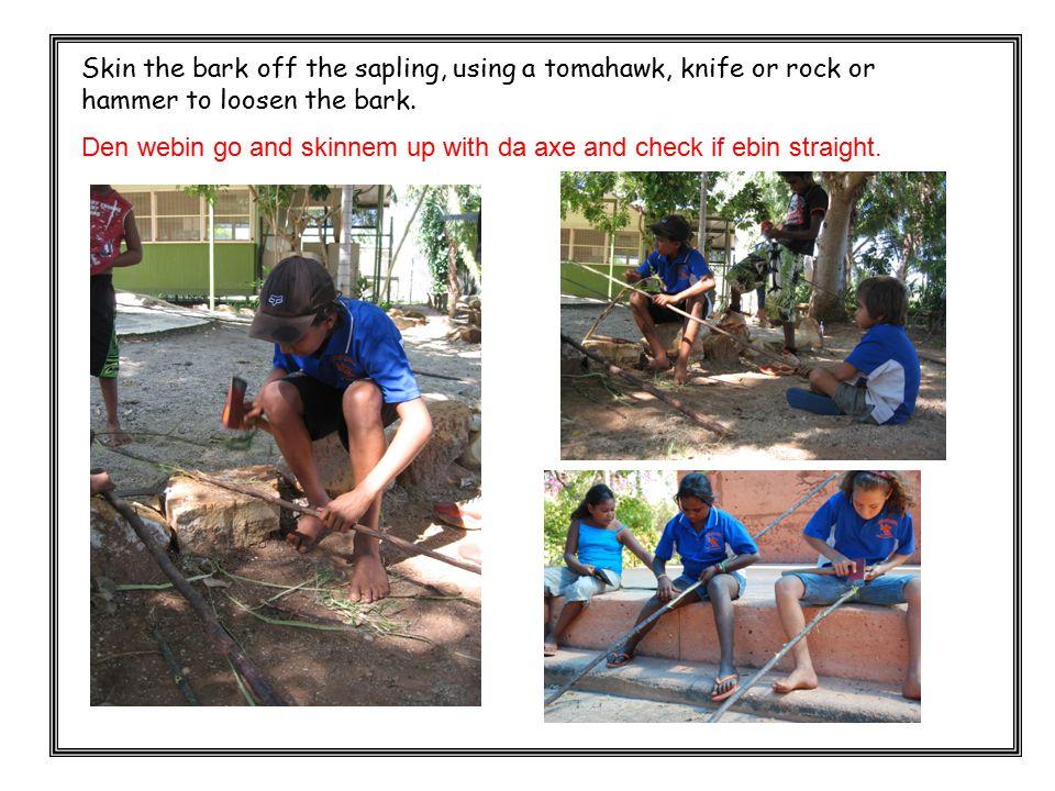 Skin the bark off the sapling, using a tomahawk, knife or rock or hammer to loosen the bark. Den webin go and skinnem up with da axe and check if ebin