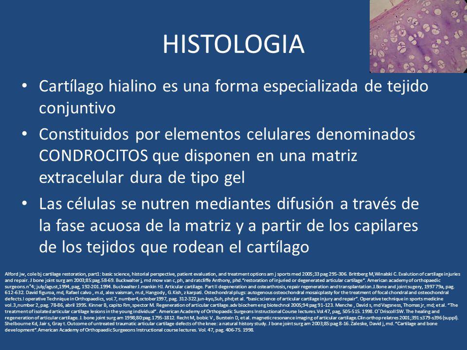 HISTOLOGIA Cartílago hialino es una forma especializada de tejido conjuntivo Constituidos por elementos celulares denominados CONDROCITOS que disponen en una matriz extracelular dura de tipo gel Las células se nutren mediantes difusión a través de la fase acuosa de la matriz y a partir de los capilares de los tejidos que rodean el cartílago Alford jw, cole bj cartilage restoration, part1: basic science, historial perspective, patient evaluation, and treatment options am j sports med 2005;33 pag 295-306.