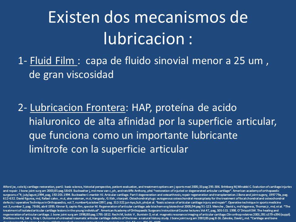 Existen dos mecanismos de lubricacion : 1- Fluid Film : capa de fluido sinovial menor a 25 um, de gran viscosidad 2- Lubricacion Frontera: HAP, proteí