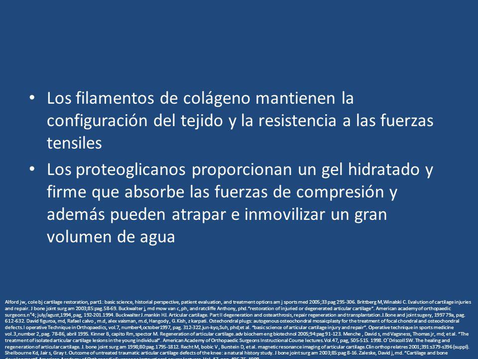 Los filamentos de colágeno mantienen la configuración del tejido y la resistencia a las fuerzas tensiles Los proteoglicanos proporcionan un gel hidrat