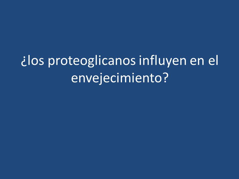 ¿los proteoglicanos influyen en el envejecimiento?