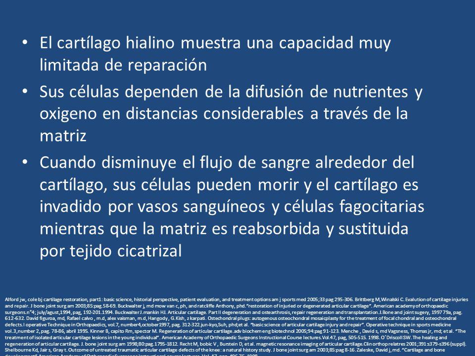El cartílago hialino muestra una capacidad muy limitada de reparación Sus células dependen de la difusión de nutrientes y oxigeno en distancias considerables a través de la matriz Cuando disminuye el flujo de sangre alrededor del cartílago, sus células pueden morir y el cartílago es invadido por vasos sanguíneos y células fagocitarias mientras que la matriz es reabsorbida y sustituida por tejido cicatrizal Alford jw, cole bj cartilage restoration, part1: basic science, historial perspective, patient evaluation, and treatment options am j sports med 2005;33 pag 295-306.