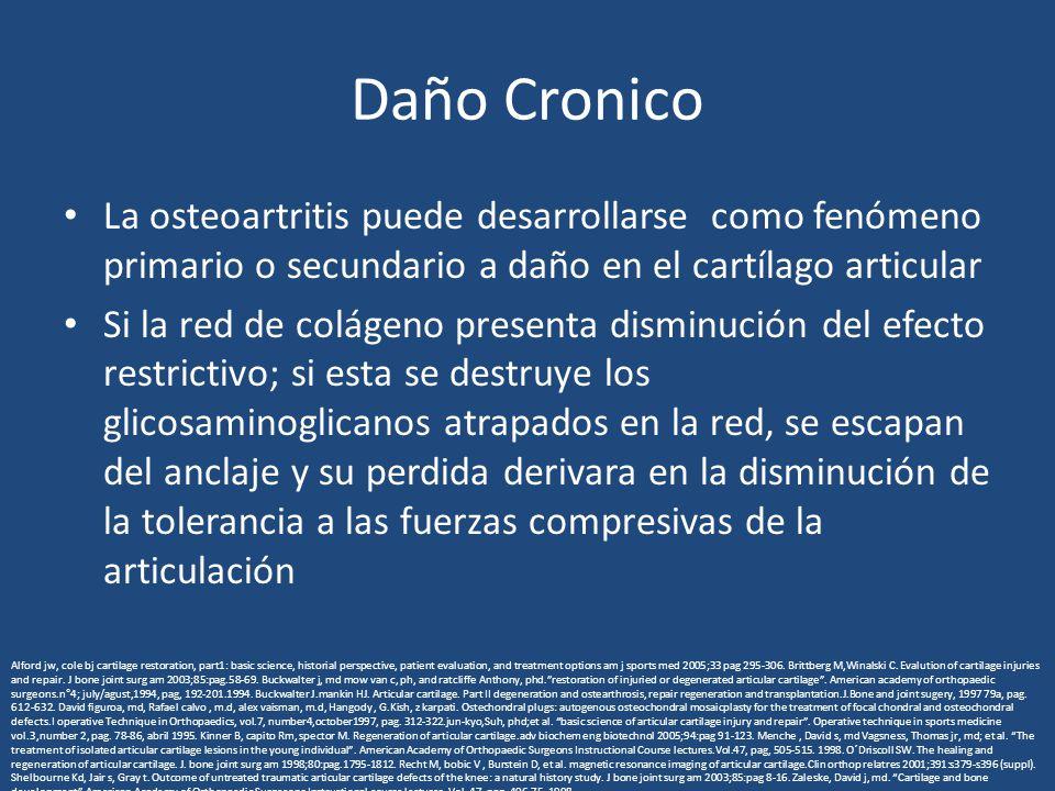 Daño Cronico La osteoartritis puede desarrollarse como fenómeno primario o secundario a daño en el cartílago articular Si la red de colágeno presenta disminución del efecto restrictivo; si esta se destruye los glicosaminoglicanos atrapados en la red, se escapan del anclaje y su perdida derivara en la disminución de la tolerancia a las fuerzas compresivas de la articulación Alford jw, cole bj cartilage restoration, part1: basic science, historial perspective, patient evaluation, and treatment options am j sports med 2005;33 pag 295-306.