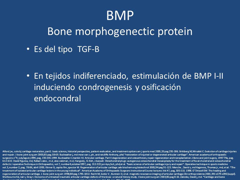 BMP Bone morphogenectic protein Es del tipo TGF-B En tejidos indiferenciado, estimulación de BMP I-II induciendo condrogenesis y osificación endocondral Alford jw, cole bj cartilage restoration, part1: basic science, historial perspective, patient evaluation, and treatment options am j sports med 2005;33 pag 295-306.