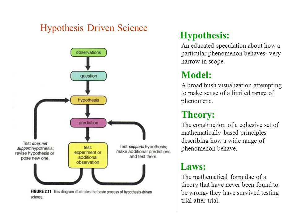 Hypothesis Driven Science Hypothesis: An educated speculation about how a particular phenomenon behaves- very narrow in scope.