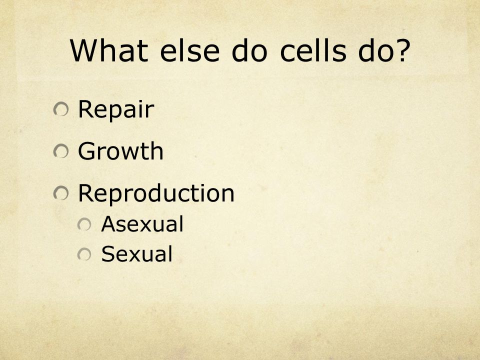 What else do cells do? Repair Growth Reproduction Asexual Sexual