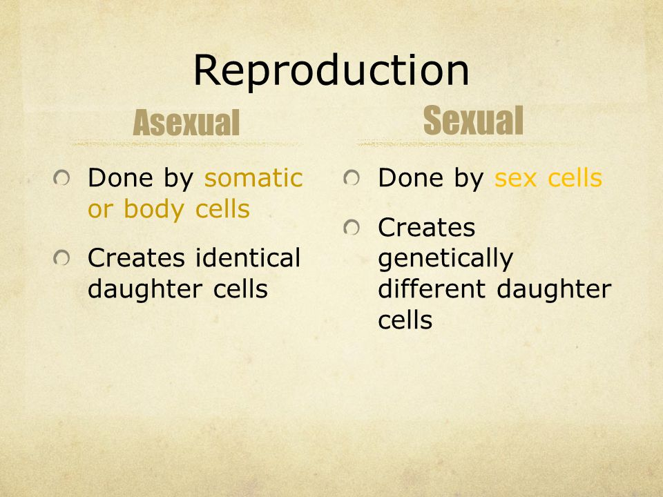 Reproduction Asexual Done by somatic or body cells Creates identical daughter cells Sexual Done by sex cells Creates genetically different daughter cells