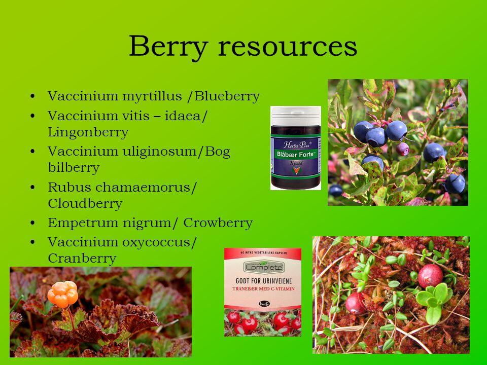 Berry resources Vaccinium myrtillus /Blueberry Vaccinium vitis – idaea/ Lingonberry Vaccinium uliginosum/Bog bilberry Rubus chamaemorus/ Cloudberry Empetrum nigrum/ Crowberry Vaccinium oxycoccus/ Cranberry