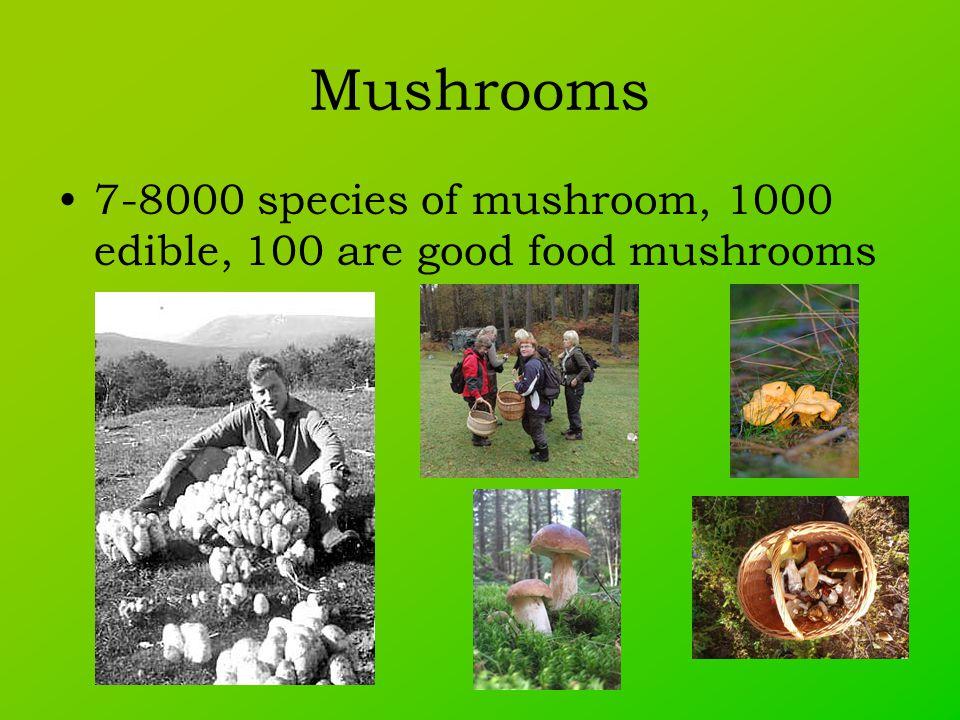 Mushrooms 7-8000 species of mushroom, 1000 edible, 100 are good food mushrooms