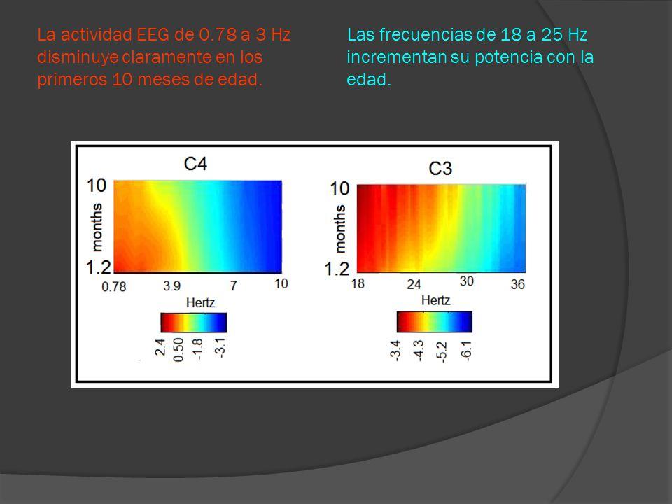 La actividad EEG de 0.78 a 3 Hz Las frecuencias de 18 a 25 Hz disminuye claramente en los incrementan su potencia con la primeros 10 meses de edad.