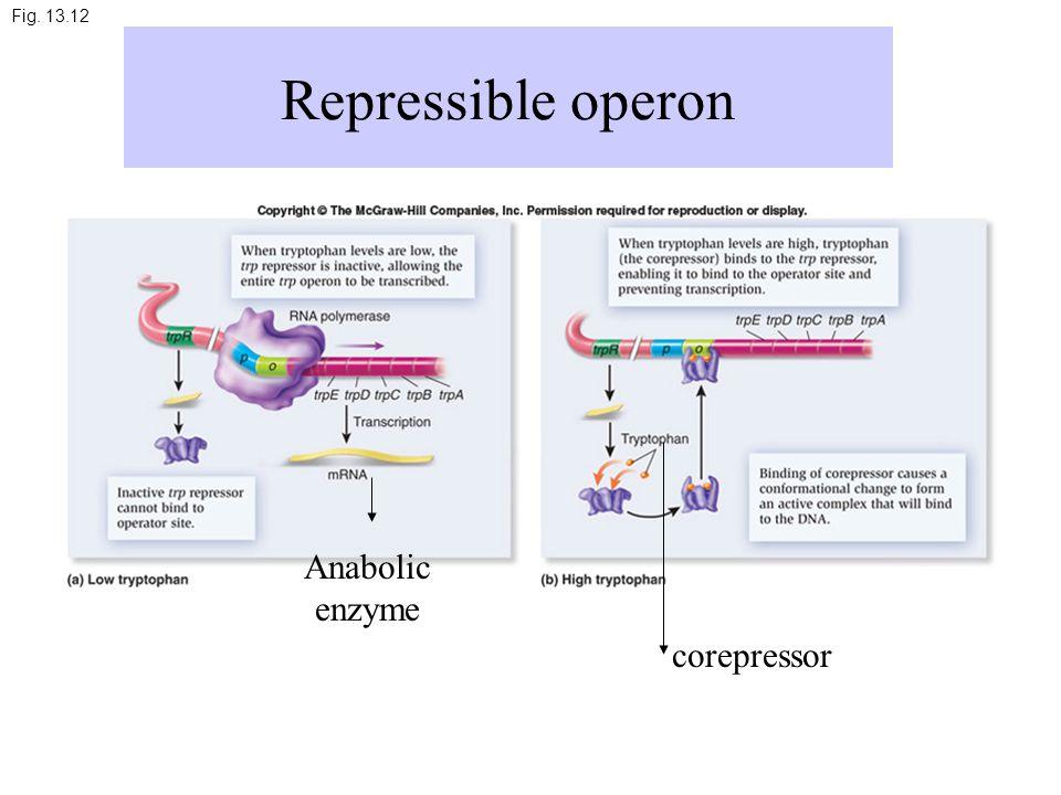 Fig. 13.12 Repressible operon Anabolic enzyme corepressor