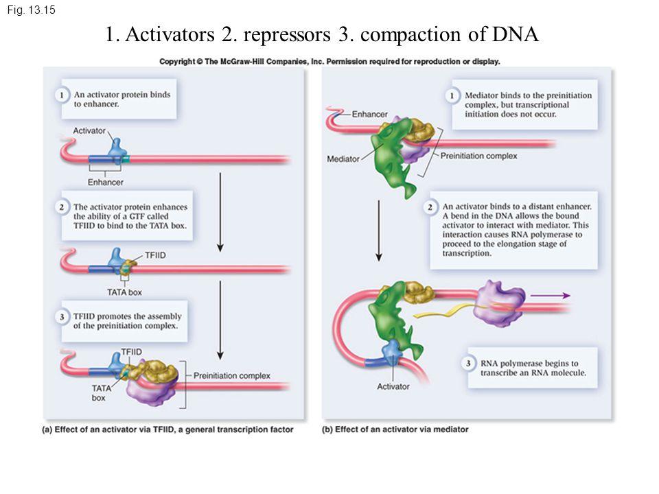 Fig. 13.15 1. Activators 2. repressors 3. compaction of DNA