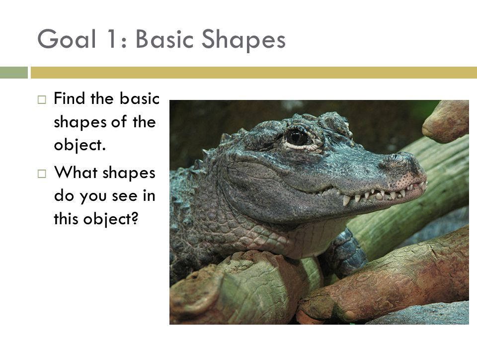 Goal 1: Basic Shapes  Find the basic shapes of the object.